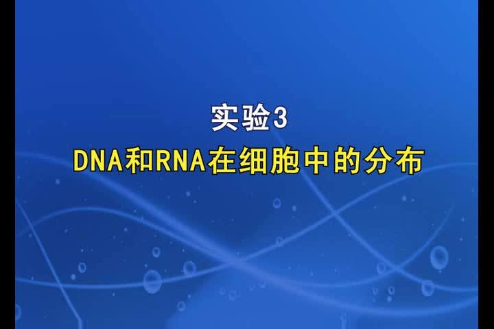 实验3DNA和RNA在细胞中的分布【高三一轮复习系列2021版步步高生物《大一轮复习讲义》】.MP4